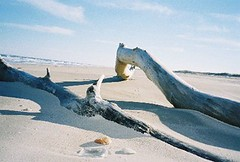 Driftwood, the Gulf of Mexico, and Sand Dunes on Padre Island National Seashore (psanchodog) Tags: padreislandnationalseashore withsky anthonygroup