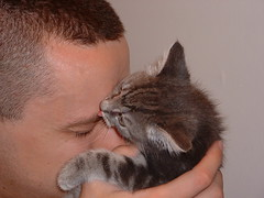 my human has a flavor! (Park Doc) Tags: pet cute cat kitten kiss funny little kitteh kissablekat lolcats bestofcats pet100 boc0209