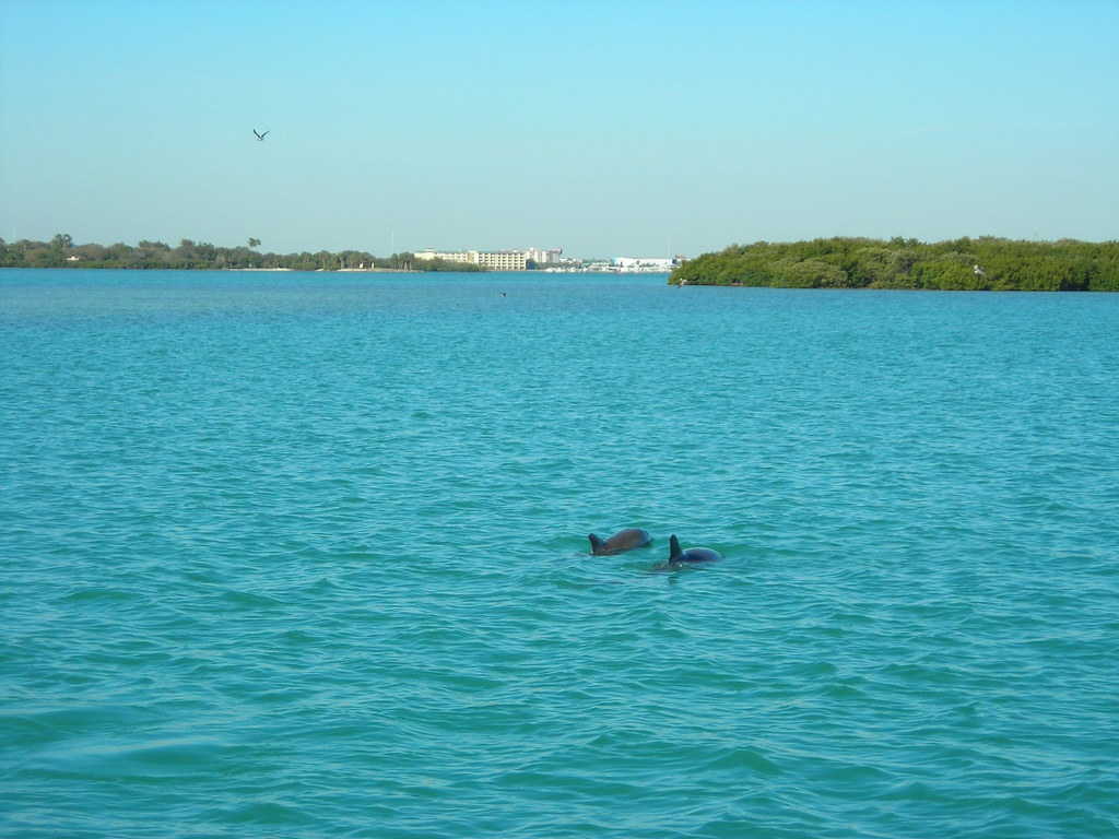 Dolphins at John's Pass