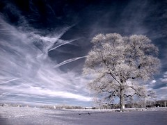 celebritree (zachstern) Tags: trees wallpaper usa tree landscape ir arbol tr maryland boom rbol infrared   albero tre puu arbre rvore strom baum trd  infravermelho    r72 copac infrarot  mytree  helluva drzewo   stablo infrarrojos   infrapuna infrarood infrarouge  infrarossi  abigfave  anawesomeshot colorphotoaward f717ir  inframerah      infravrs  infraerven