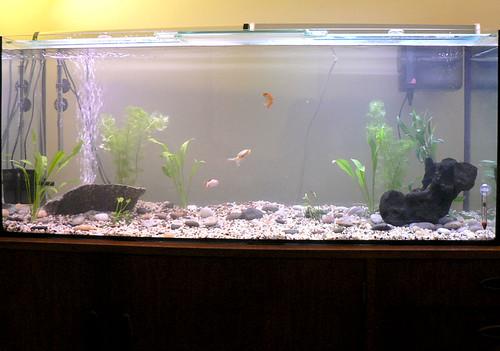 Aquarium (Stage 1)