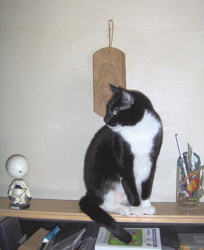 shelfcat!