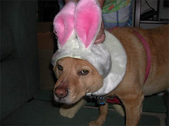 Playboy Doggie