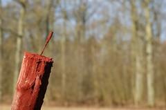 rot (HagenL) Tags: rot wald wildfütterung einemhof