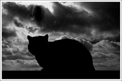 Look, up in the sky. Is it a bird? Is it a plane? (Finntasia) Tags: sky black silhouette clouds cat fence dark evening catman catburglar finntasia nigelfinn