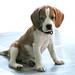 子犬:puppy