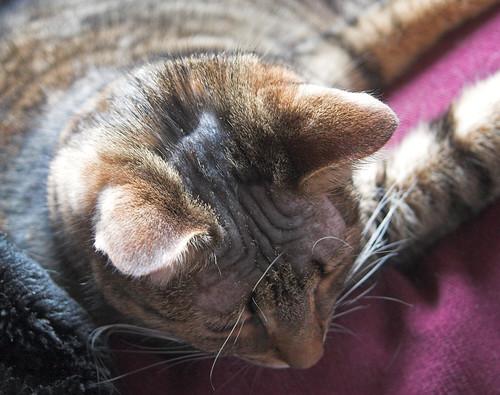 Baldy-cat!