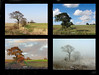 The four seasons (Mr Grimesdale) Tags: autumn winter summer spring fourseasons mrgrimsdale stevewallace 15challengeswinner mrgrimesdale grimesdale
