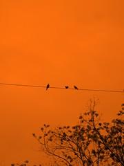 The Birds. (PrettyProblem) Tags: sky orange photoshop explore thebirds telephonewire alfredhitchcock flickrexplore interestingness111 i500 explore111 2pair