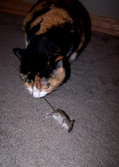 Snickers left me a present (.A.A.) Tags: cat mouse death snickers bestcatever