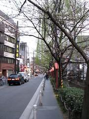 Kiyamachi (MShades) Tags: japan kyoto   sakura cherryblossoms kiyamachi