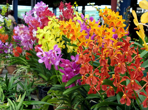 Orchids by Hydroponic System