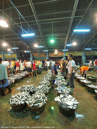 Navotas manila fishport wholesale market fish  Buhay Pinoy Philippines Filipino Pilipino  people pictures photos life Philippinen  菲律宾  菲律賓  필리핀(공화국)