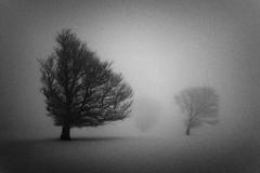 AS STORMS RISE WOUNDS APPEAR (Martin Gommel) Tags: blackandwhite white tree landscape grain grainy questfortherest schauinsland blackforestkwerfeldein