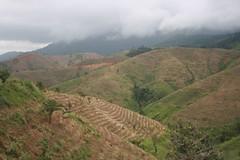 Deforested hills in Vietnam's Central Highlands
