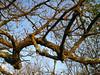 branches against sky - rami con sfondo cielo (sunshinecity) Tags: branches flickrmeet rami april1st branchesagainstsky mnfg dintorniromaniromamor barbaranoromano romamorasutriebarbarano 1stflickrmeetromamor