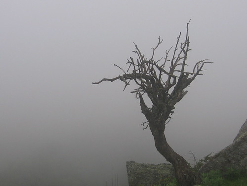 Snag in the fog