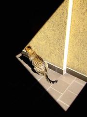 K (Ulfio) Tags: shadow sun muro wall cat ombra henry finepix fujifilm sole gatto pelo enrico coda geometrie pianerottolo s5600