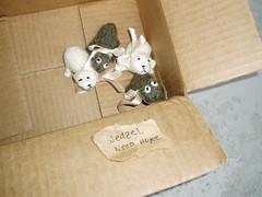 Adopt a weasel