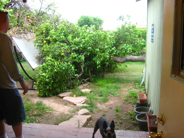 no more grapefruit tree!
