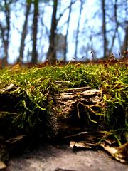 (Kaija) Tags: macro moss minneapolis twincities eloisebutlerwildflowergarden