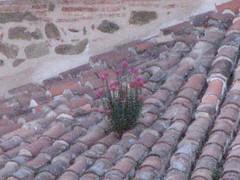 flowersonroof