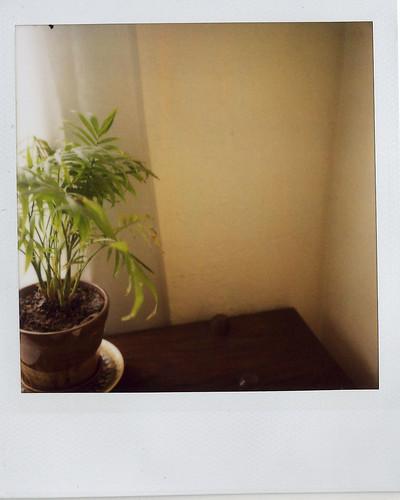 jason's :: plant