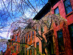 Spring in Brooklyn (omphale44) Tags: nyc newyorkcity trees architecture brooklyn spring bluesky brownstones rainermariarilke parkslopebrooklyn p1f1