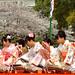 姫路城:Cherry Blossoms Festival