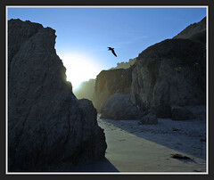 Cove... (Julian E...) Tags: light sunset bird beach rock bravo cove peopleschoice naturesfinest littlestories elmatadorstatebeach abigfave impressedbeauty goldenphotographer