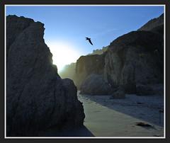 Cove... (Julian E...) Tags: light sunset bird beach rock bravo cove peopleschoice naturesfinest littlestories elmatadorstatebeach abigfave impressedbeauty goldenphotographer