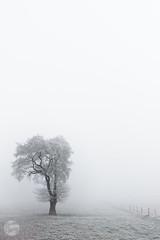 New arrogance (Benjamin Tau) Tags: bornhorst nebel zaun frost lowersaxony cold field feld baum tree strand fence schwarz ice black fog niedersachsen snow freeze white