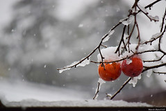 柿 / persimmon (March Hare1145) Tags: persimmon 柿 fruit winter 冬 japan 日本