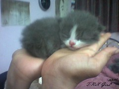 Fufu the cat (Shaima82_4) Tags: cute cat kitten hand sleep