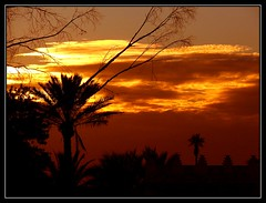 Palmeras al anochecer - Palms in the sunset (jose_miguel) Tags: sunset espaa miguel palms spain bravo searchthebest quality jose silhouettes palmeras morocco maroc marrakech marrakesh marruecos soe siluetas anochecer helluva blueribbonwinner magicdonkey interestingness85 specland marraquech abigfave p1f1 explore85 panasoniclumixfz50 shieldofexcellence anawesomeshot impressedbeauty flickrplatinum isawyoufirst 200750plusfaves 200750plusfavesjanuarycontest 200750plusfavesvotingopen allxpressus