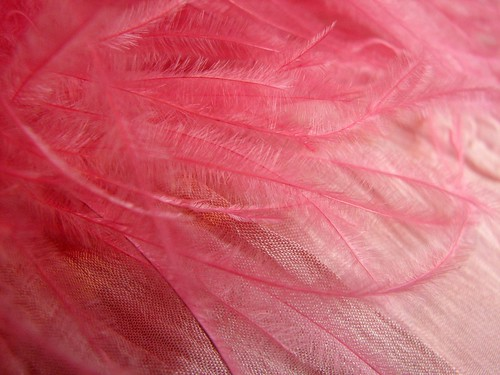 Pink Feathered Handbag macro
