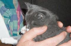 sleeping trubble kitten
