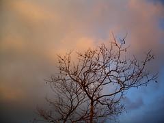 winter wreckages - by *brilho-de-conta
