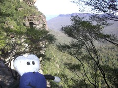 Squage In The Blue Mountains