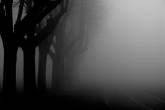 Vanishing (Lumase) Tags: morning trees italy tree love topf25 fog mystery torino blackwhite topf50 bravo mood moody foggy vanishing italians treesinfog outstandingshots spselection abigfave p1f1 lumase holidaysvacanzeurlaub 200750plusfaves treesubject percorsiurbanidiof