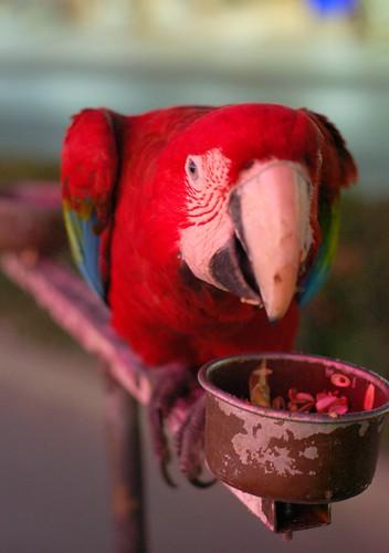 parrot in Agia Napa, last summer