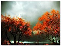 Sunset Drenched Trees (Revisited & Revised) (Gianni A. Neiviller) Tags: ca autumn trees orange leaves grey losangeles gloomy overcast natura explore burbank gianni myfaves photographia nikoncoolpixs6 novideos flickrwhikr losangelesphotographer neiviller giannineiviller gianniphotography primeimagery giannineivillerphotographycom