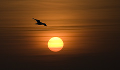 It is the beautiful bird which gets caged... (d_oracle) Tags: sunset sun bird freedom nikon bravo shots cage d200 beautifull outstanding chineseproverb outstandingshots abigfave anawesomeshot colorphotoaward