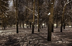 Snowy Forest of Kharkov (Stuck in Customs) Tags: trees brown snow night forest photography nikon photographer ukraine kharkov hdr ukraina highquality    stuckincustoms  treyratcliff