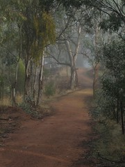 Majura Time (westrock-bob) Tags: trees winter copyright favorite tree green nature beauty fog mystery fairytale gum wonder photography grey photo peace place natural shots path walk glory awesome capital gray australian dream foggy bob vivid surr