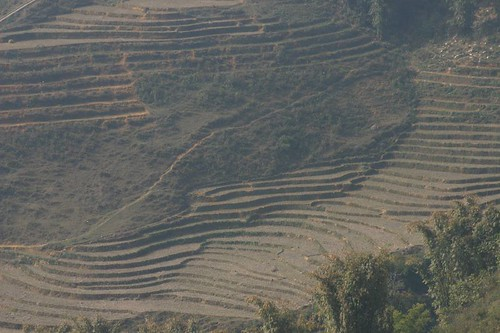 The Classic View: rice fields near Sapa.