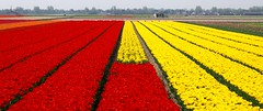 Spring in Holland - by edwindejongh