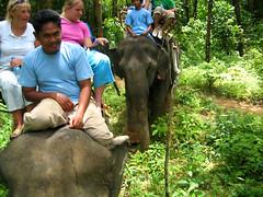 Водитель слоника на переднем плане.