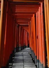 Torii gallery in Nezu Jinja (BlueSkyinBY) Tags: orange japan catchycolors geotagged nikon shrine d200 toyko torii bunkyo nezu nezujinja allrightsreserved geo:lon=139760344 geo:lat=35719908