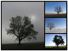 Lonely Tree Photo Mosaic